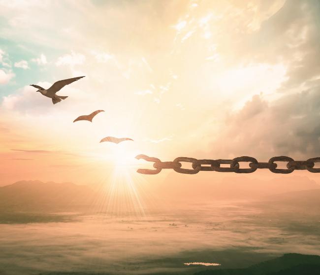 freedom chain 650 x 560